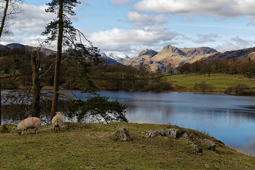 View across to Langdale Pikes from Loughrigg Tarn