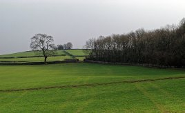 Fields with Warriner's Wood on the right