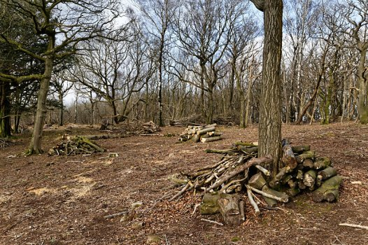 Tree clearing in Arnside Knott Wood